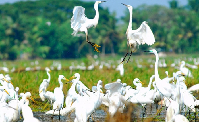 Kumarakom bird sanctury